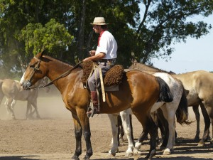Working cattle ranch in the 'Pampas' of Uraguay